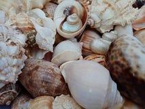 Sluit omhoog combo van overzeese shells met texturen Achtergrond behang royalty-vrije stock afbeelding