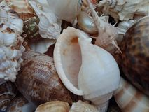 Sluit omhoog combo van overzeese shells met texturen Achtergrond behang stock foto's