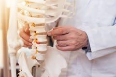 Sluit omhoog De arts toont ruggewervels op skelet stock afbeelding