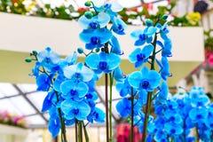 Sluit omhoog de blauwe achtergrond van orchideebloemen stock afbeeldingen