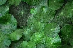 Sluit omhoog de decoratie van cirkel groene leaft als absract groen Stock Afbeeldingen