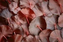 Sluit omhoog de decoratie van cirkel rode leaft als absract groen Stock Afbeelding