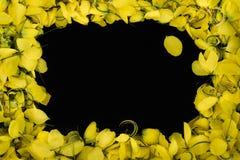 Sluit omhoog de Gele bloem van de kaderaard op zwarte wallpeper textuur als achtergrond stock foto's