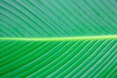 Sluit omhoog de groene achtergrond van de bladtextuur Royalty-vrije Stock Foto's