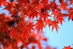 Sluit omhoog de herfst doorbladert met aardachtergrond Royalty-vrije Stock Afbeeldingen