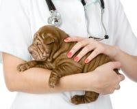 Sluit omhoog de hond van puppysharpei op handen bij de dierenarts. royalty-vrije stock foto