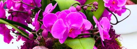 Sluit omhoog de purpere achtergrond van de orchideebloem in bloempot royalty-vrije stock fotografie