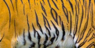Sluit omhoog de textuur van de tijgerhuid stock foto