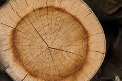Sluit omhoog de textuurachtergrond van de boomstomp, boomring Royalty-vrije Stock Fotografie