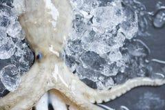 Sluit omhoog de Verse ruwe pijlinktvis van octopuszeevruchten op ijs met donkere achtergrond in de markt royalty-vrije stock afbeeldingen