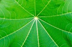 Sluit omhoog de volledige textuur en de achtergrond van het kader groene blad Stock Fotografie