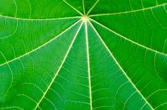 Sluit omhoog de volledige textuur en de achtergrond van het kader groene blad Stock Afbeelding