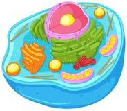 Sluit omhoog diagram van dierlijke cel Stock Foto's