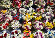 Sluit omhoog diverse kleurrijke bloemen in bloemist stock foto