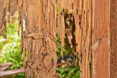 Sluit omhoog een deel van een houten bederf stock fotografie