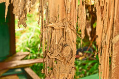 Sluit omhoog een deel van een houten bederf stock foto
