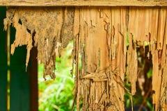 Sluit omhoog een deel van een houten bederf stock foto's