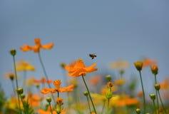 Sluit omhoog foto van bijenarbeider op bloemen Stock Foto