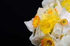 Sluit omhoog foto van boeket van wit en geel gele narcissen geplaatst o Royalty-vrije Stock Fotografie