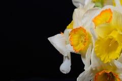 Sluit omhoog foto van boeket van wit en geel gele narcissen geplaatst o Stock Afbeelding