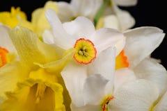 Sluit omhoog foto van boeket van witte en gele gele narcissen op zwarte Royalty-vrije Stock Foto