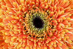 Sluit omhoog foto van een mooie gele bloem Royalty-vrije Stock Foto