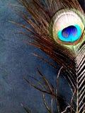 Sluit omhoog foto van een pauwveer, op een zwarte achtergrond royalty-vrije stock afbeeldingen