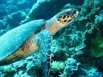 Sluit omhoog foto van een zeeschildpad De foto is in gele en blauwe kleuren het deel van vin is verschenen royalty-vrije stock afbeelding