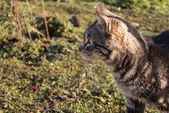 Sluit omhoog foto van kat in de tuin kijkend aan de linkerzijde stock afbeelding