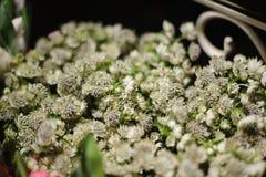 Sluit omhoog foto van van uiterst kleine witte bloemen Stock Afbeeldingen