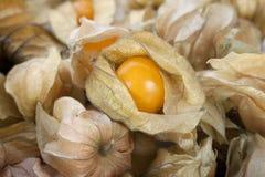 Sluit omhoog Fruit Physalis stock foto's