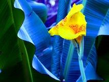 Sluit omhoog gele bloem royalty-vrije stock afbeelding