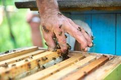 Sluit omhoog geschoten van bijenkorven in bijenstal Royalty-vrije Stock Afbeeldingen