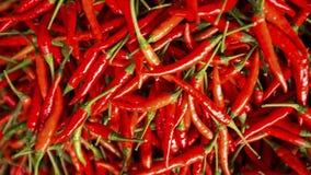 Sluit omhoog geschoten van de rode achtergrond van de Spaanse peperpeper Stock Foto