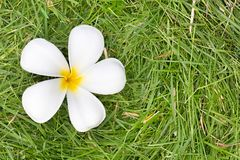 Sluit omhoog Geschoten van de Witte de bloembloei van Almeria Stock Foto's