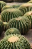Sluit omhoog geschoten van een groep cactus Groot Behang stock foto