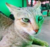 Sluit omhoog geschoten van kattengezicht stock afbeeldingen