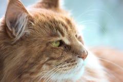 Sluit omhoog geschoten van kattengezicht het kijken royalty-vrije stock afbeelding