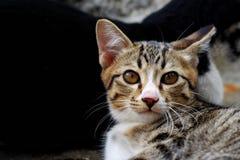 Sluit omhoog gezicht van jonge en leuke kat stock afbeeldingen