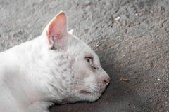 Sluit omhoog gezicht van Thaise kat op de cementmuur Royalty-vrije Stock Afbeeldingen