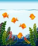 Sluit omhoog goudvis in tank stock illustratie