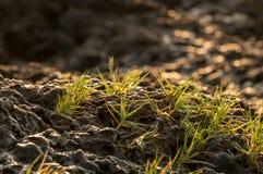 Sluit omhoog gras op de overzeese rots Stock Afbeeldingen
