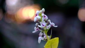 Sluit omhoog grasbloem againts het zonlicht met bokehachtergrond stock videobeelden