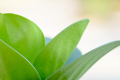 Sluit omhoog groen blad Royalty-vrije Stock Foto's