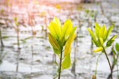 Sluit omhoog groen blad op achtergrond van boom de onscherpe bokeh in tuin van bosblad op een gebied met bladeren Het gebruiken v Stock Afbeelding