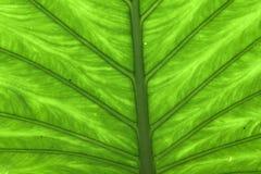 Sluit omhoog groen bladpatroon Stock Foto