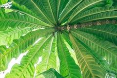 Sluit omhoog groen groot vers blad in bos Stock Foto's