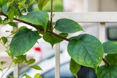 Sluit omhoog groene bladeren Royalty-vrije Stock Foto's