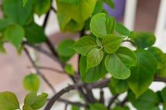 Sluit omhoog groene bladeren Stock Foto