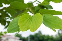 Sluit omhoog groene bladeren Royalty-vrije Stock Afbeeldingen